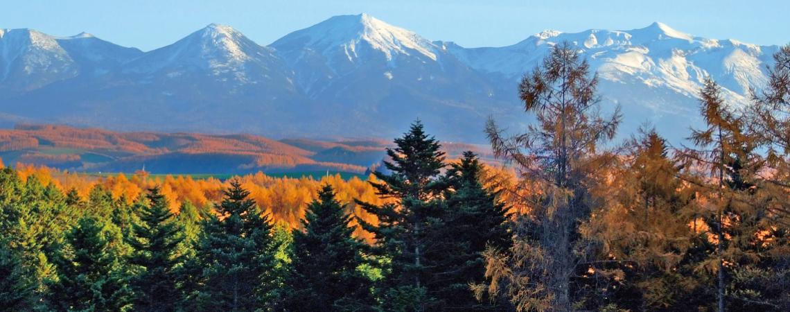 紅葉と大雪山